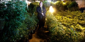 Paul Stanford with medical marijuana garden