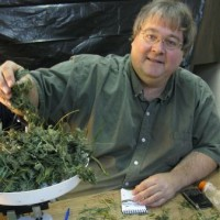 Paul Stanford trims his medical marijuana he gives away free to patients in Oregon