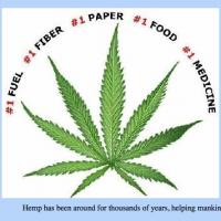 Paul Stanford speaks to Salem News about hemp